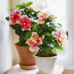 Indoor Blooming Plants That Are Easy to Maintain